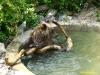 kladno-medvedarium-2013-14