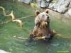 kladno-medvedarium-2013-16