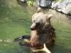 kladno-medvedarium-2013-17