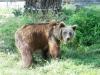 kladno-medvedarium-2013-20