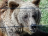 kladno-medvedarium-2013-21