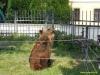 kladno-medvedarium-2013-22